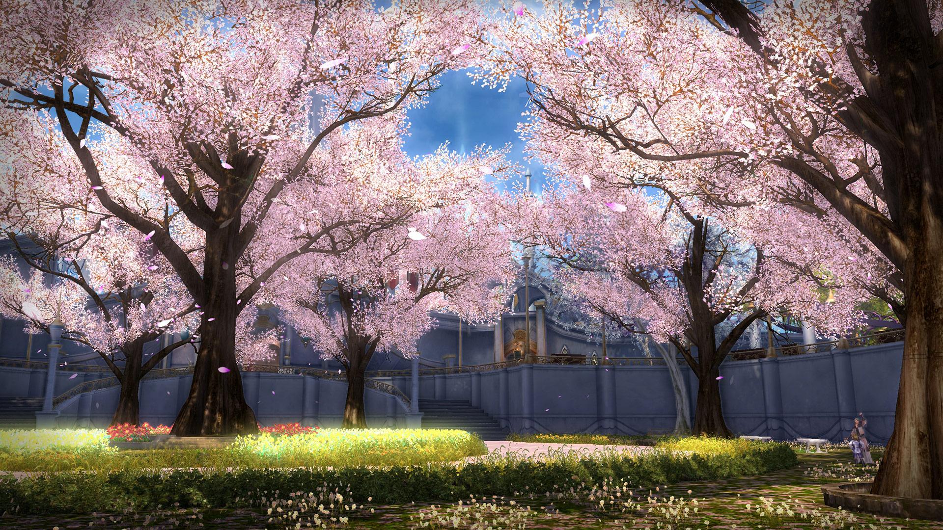 2019-02-21_AI_Cherry_Blossom_Festival_Ev